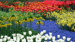keukenhof photo